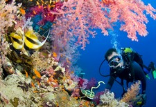 butterfly fish and scuba diver