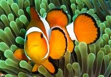 Fish from Ko Lanta island
